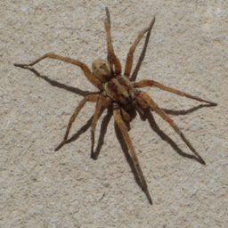 Уничтожение пауков в Тольятти